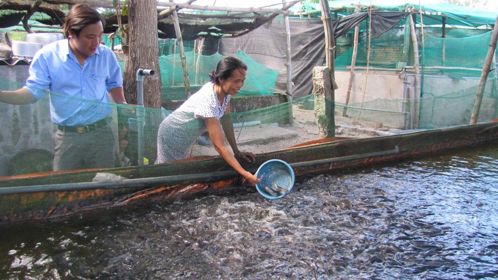 nuôi cá rô phi 3